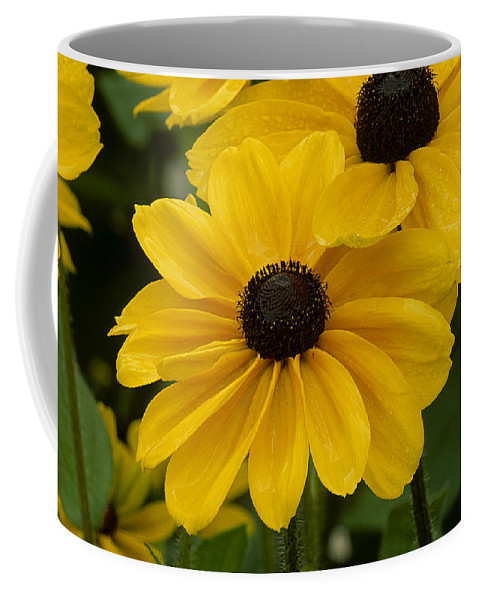 Daisy Coffee Mug featuring the photograph Black-eyed Susan by Eric Albright