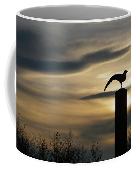 Wildlife Coffee Mug featuring the photograph Black Headed Gull  Larus Ridibundus by James Silverthorne