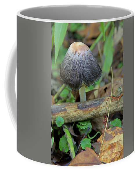Brown Coffee Mug featuring the photograph Black Lace by Alan Look