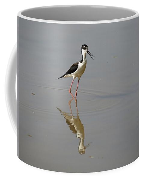 Black-necked Stilt Coffee Mug featuring the photograph Black-necked Stilt by Laurel Powell