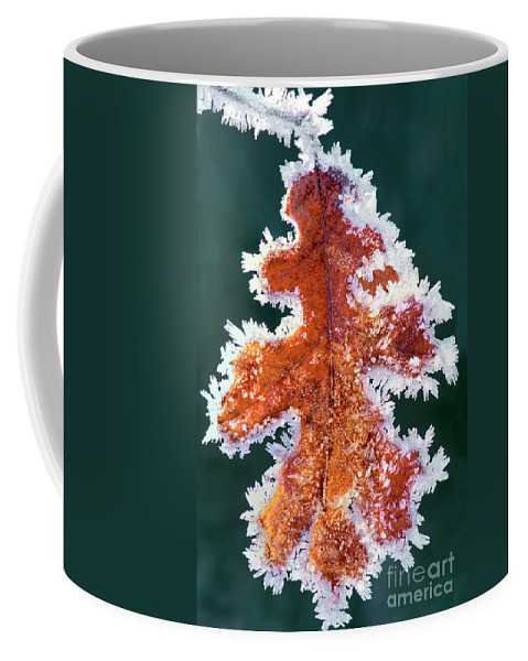 North America Coffee Mug featuring the photograph Black Oak Leaf Rime Ice Yosemite National Park California by Dave Welling