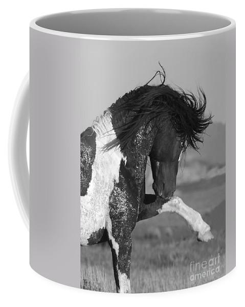 Stallion Coffee Mug featuring the photograph Black Pinto Stallion Strikes Out by Carol Walker