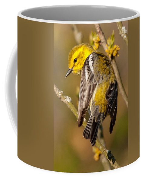 Bird Coffee Mug featuring the photograph Black-throated Green Warbler by Richard Kitchen