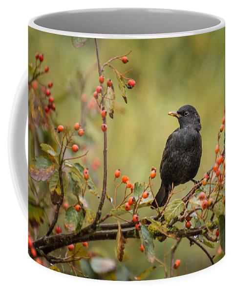 Animal Coffee Mug featuring the photograph Blackbird On Branch by David Head