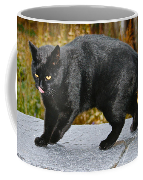 Cats Coffee Mug featuring the photograph Blackjack Licking His Nose by Kristin Hatt