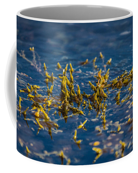 Photography Coffee Mug featuring the photograph Bladder Seaweed, Fucus Vesiculosus by Panoramic Images