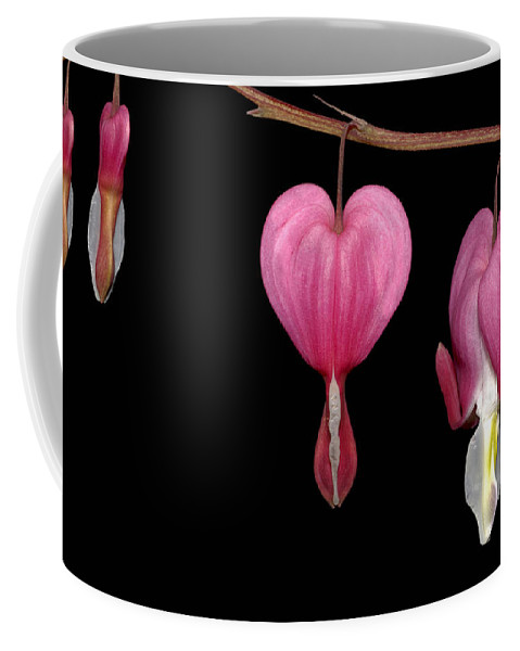 Flower Coffee Mug featuring the photograph Bleeding Heart Flowers Showing Blooming Stages by Phil Cardamone