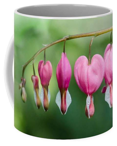 Rhythm Coffee Mug featuring the photograph Bleeding Hearts by Georgette Grossman