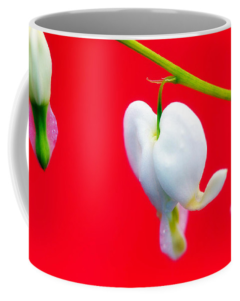 Red Coffee Mug featuring the photograph Bleeding Hearts by Lisa Knechtel