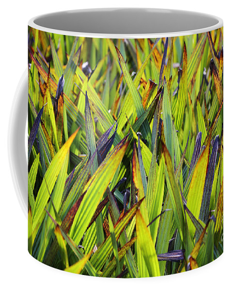 Leaves Of Bloodroot Wachendorfia Thyrsiflora Bloodwort Family Texture Background Green Lush Leaves Stems Flower Flora Floral Abstract Coffee Mug featuring the photograph Bloodroot Abstract by Neil Overy
