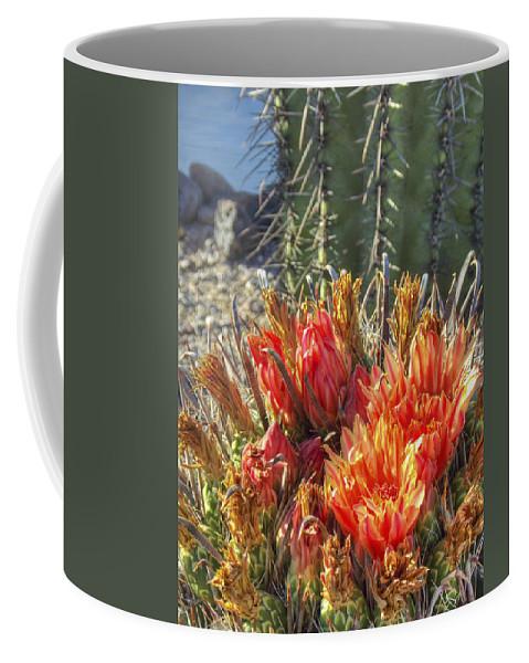 Arizona Coffee Mug featuring the photograph Blooming Barrel by Ryan Seek