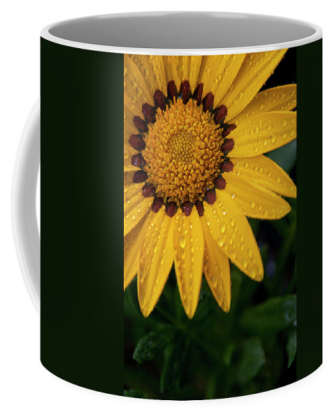 Yellow Flower Coffee Mug featuring the photograph Blossom by Ron White