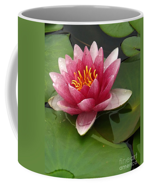 Bloom Coffee Mug featuring the photograph Blossoming Waterlily by Sara Raber