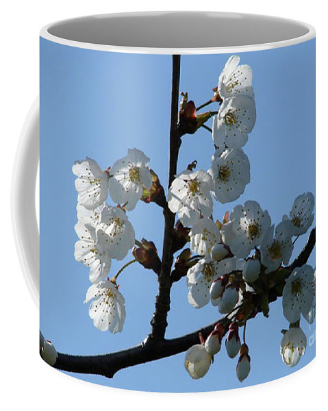 Blossoms Coffee Mug featuring the photograph Blossoms by Carol Lynch