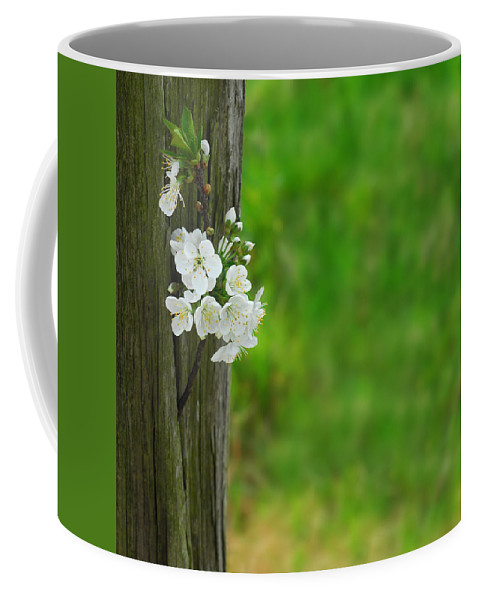 Garden Coffee Mug featuring the photograph Blossoms by TouTouke A Y