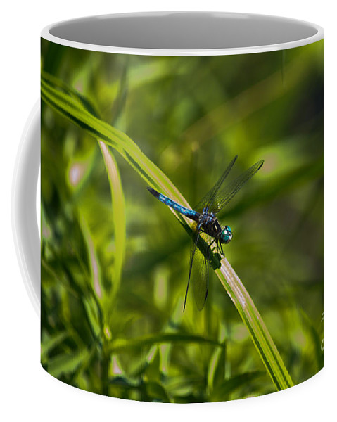 Blue Coffee Mug featuring the photograph Blue Damsel Dragon Fly by Scott Hervieux