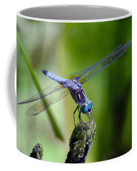Animals Coffee Mug featuring the photograph Blue Dragonfly by Jim Shackett