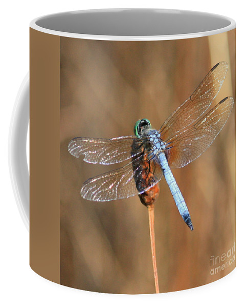 Dragonfly Coffee Mug featuring the photograph Blue Dragonfly Square by Carol Groenen