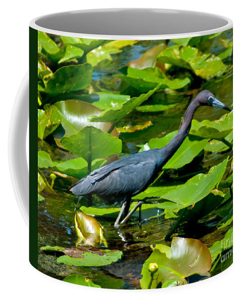 Blue Coffee Mug featuring the photograph Reddish Egret Among The Lily Pads by Stephen Whalen