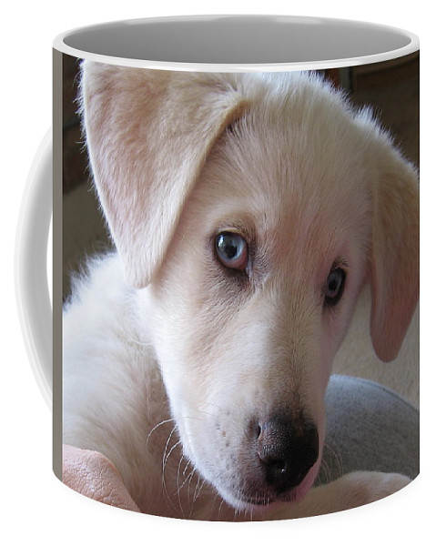 Blue Eyes Coffee Mug featuring the photograph Blue Eyes by Amy Hosp