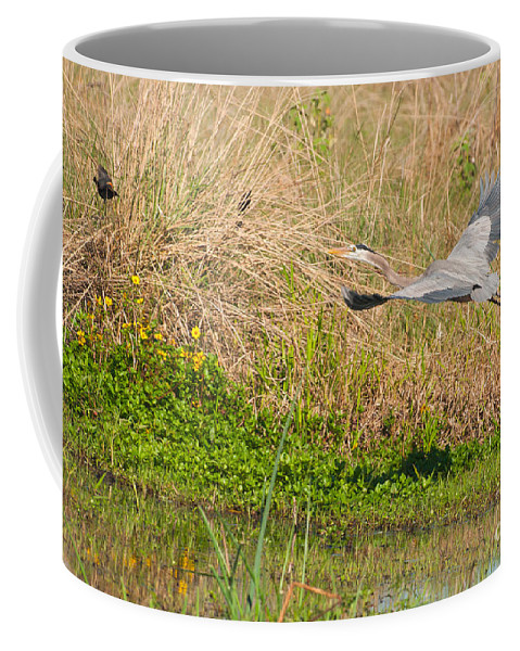 Great Coffee Mug featuring the photograph Blue Heron And The Black Bird by Photos By Cassandra