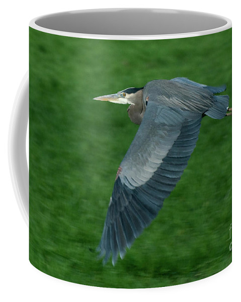 Birds Coffee Mug featuring the photograph Blue Heron by Rod Wiens