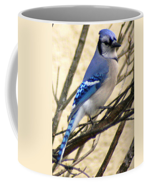 Blue Jay Coffee Mug featuring the photograph Blue Jay In A Bush by Laurel Talabere