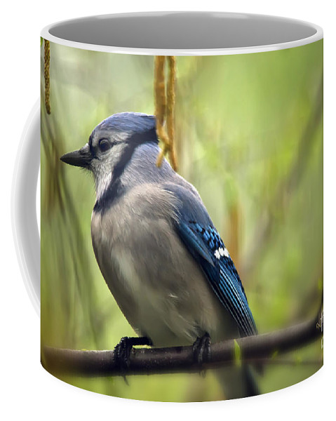Bird Coffee Mug featuring the photograph Blue Jay On A Misty Spring Day by Lois Bryan