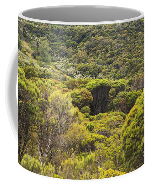 Blue Mountains Australia Mountain Tree Trees Plant Plants Landscape Landscapes Lincoln Rock Lookout Lookouts Rocks The King's Tableland Coffee Mug featuring the photograph Blue Mountains Greens by Bob Phillips