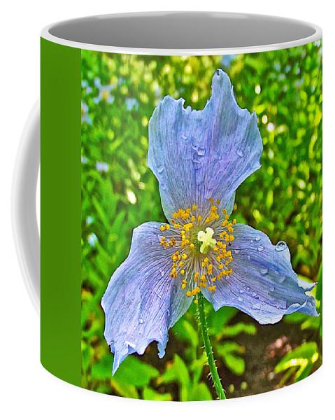 Blue Poppy In Les Jardins De Metis Or Reford Gardens Near Grand-metis-quebec Coffee Mug featuring the photograph Blue Poppy In Les Jardins De Metis Or Reford Gardens Near Grand-metis-quebec by Ruth Hager