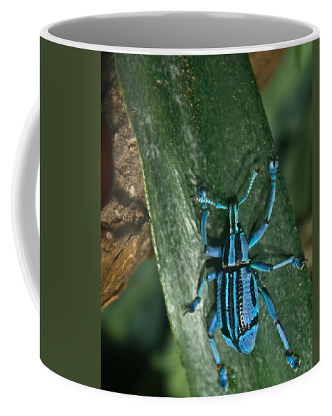 Blue Coffee Mug featuring the photograph Blue Tropical Weevil by Douglas Barnett