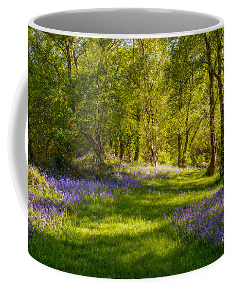Bluebells Coffee Mug featuring the photograph Bluebells by Amanda Elwell