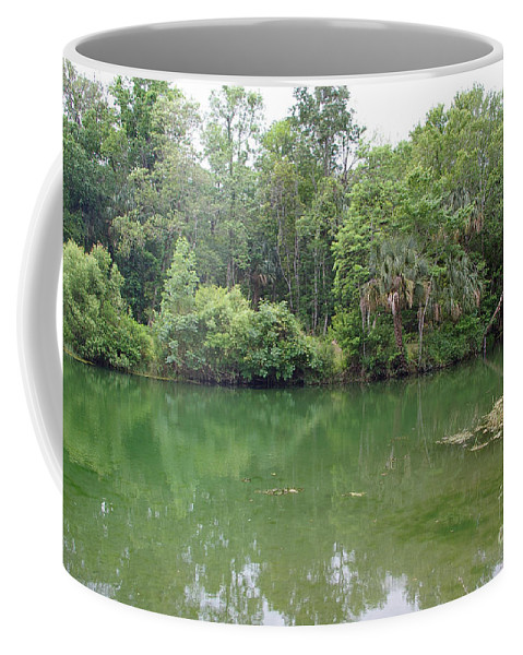 Bluebird Springs Coffee Mug featuring the photograph Bluebird Springs by Nancy L Marshall