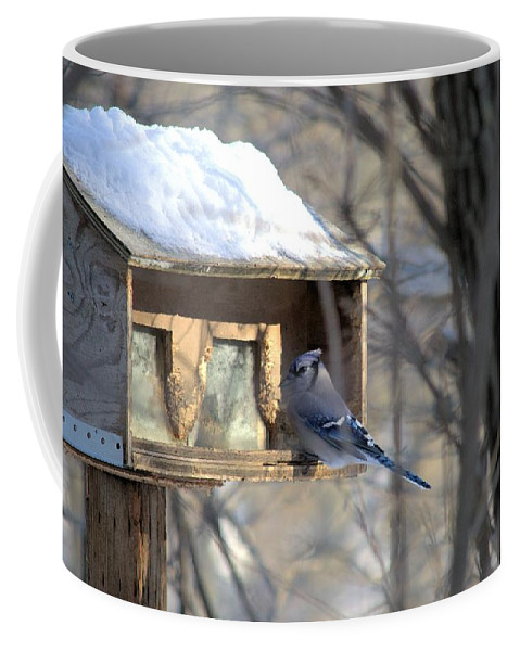 Bird Coffee Mug featuring the photograph Bluejay by Bonfire Photography