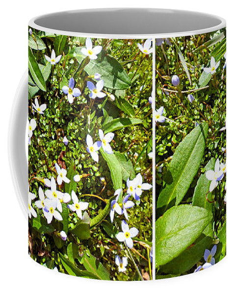 Plants Coffee Mug featuring the photograph Bluets In Stereo by Duane McCullough