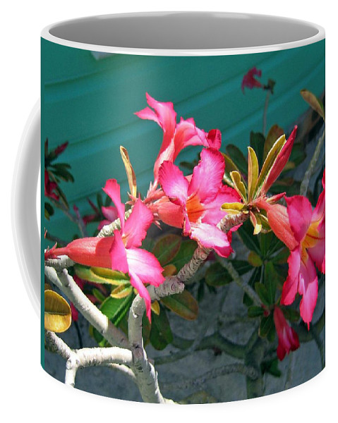 Pink Coffee Mug featuring the photograph Blush Of Pink by Jay Milo