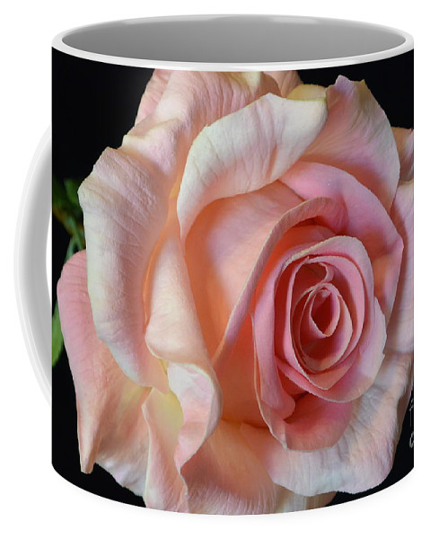 Blushing Pink Rose Coffee Mug featuring the photograph Blushing Pink Rose by Jeannie Rhode