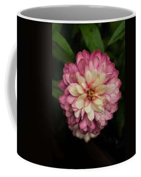 Zennia Coffee Mug featuring the photograph Blushing Zennia by Douglas Barnett