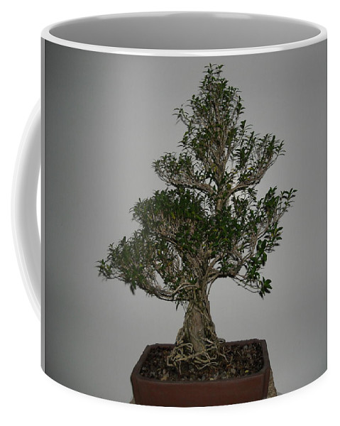 All Coffee Mug featuring the photograph bonsai tree Serissa Foetida live tree art exposed root over rock by Ricks Tree Art