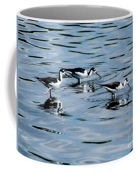 Booby Birds Coffee Mug featuring the photograph Boobies by Amar Sheow