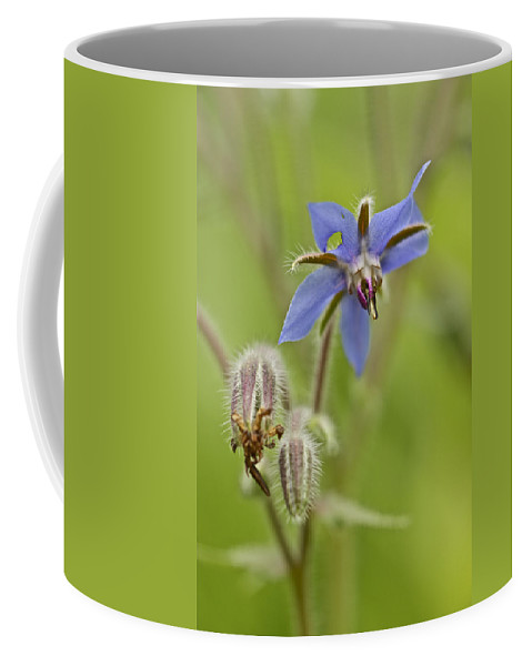 Borage Coffee Mug featuring the photograph Borage Wildflower - Borage Officinalis - Annual Herb by Mother Nature