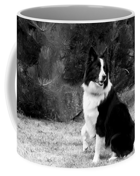 White Coffee Mug featuring the photograph Border Collie by Jaroslav Frank