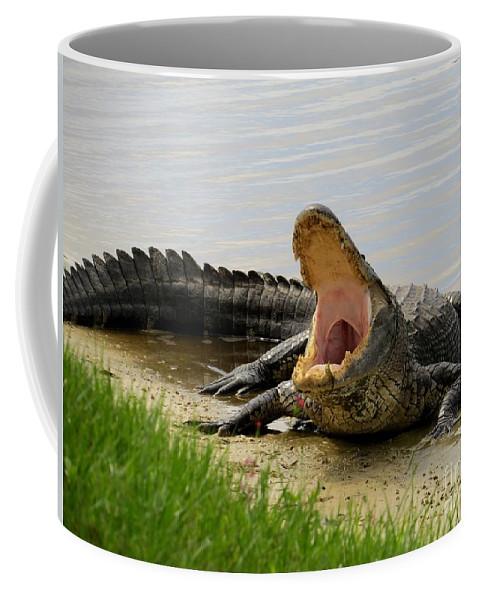 Alligator Coffee Mug featuring the photograph Boring And Yawning by Zina Stromberg