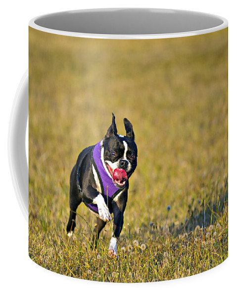 Action Coffee Mug featuring the photograph Boston Terrier by Paul Fell