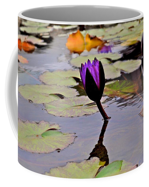 Lily Pad Photograph Coffee Mug featuring the photograph Botanical Garden Lotus Flowers by Kristina Deane