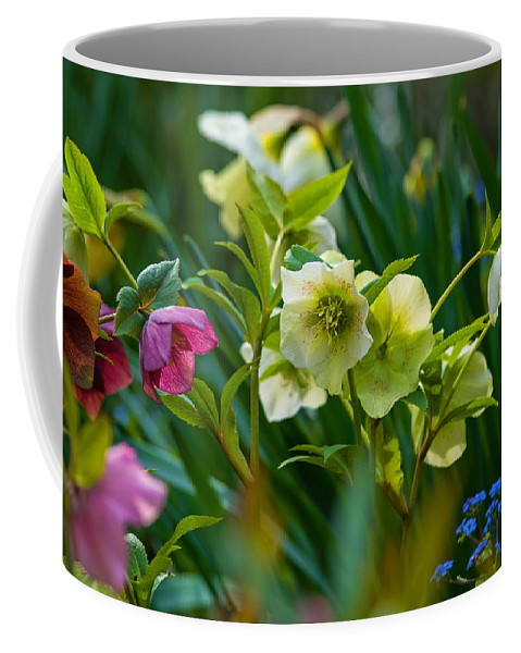 Nature Coffee Mug featuring the photograph Bouquet Of Lenten Roses by Jordan Blackstone