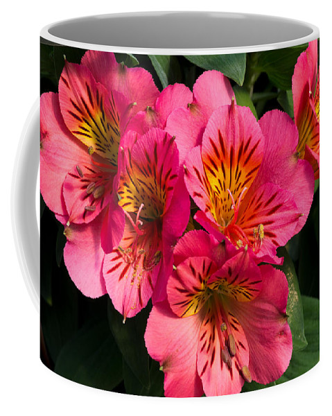 Agriculture Coffee Mug featuring the photograph Bouquet Of Pink Lily Flowers by John Trax