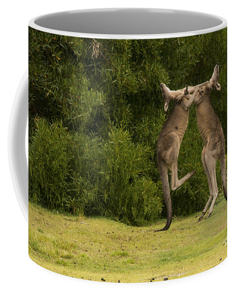 Great Ocean Road Australia Angles Golf Club Boxing Kangaroo Kangaroos Animal Animals Creature Creatures Tree Tree Grass Grasses Coffee Mug featuring the photograph Boxers by Bob Phillips