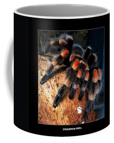 Spider Coffee Mug featuring the photograph Brachypelma Smithi - Redknee Tarantula by Daliana Pacuraru