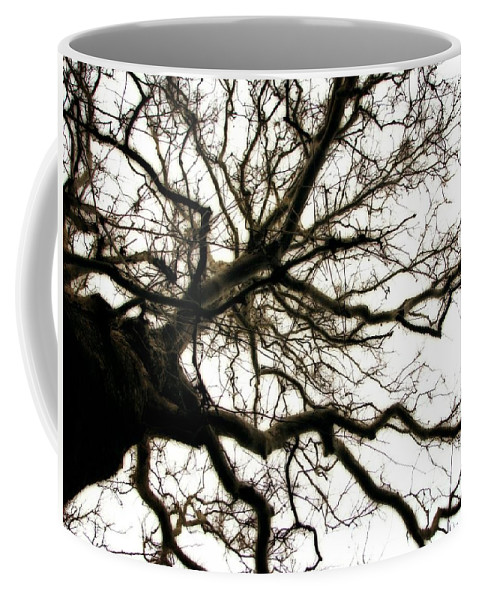 Branches Coffee Mug featuring the photograph Branches by Michelle Calkins